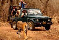 Jeep Safari At Ranthambore