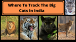 Where to track the big cats in India