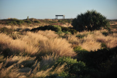 back-dunes-24x26