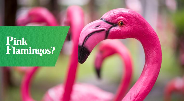 solivita-pink-flamingos