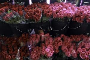 Asstd Roses $17.50 per dozen