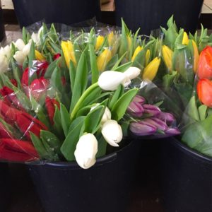 Holland Tulips $14.95 per bunch