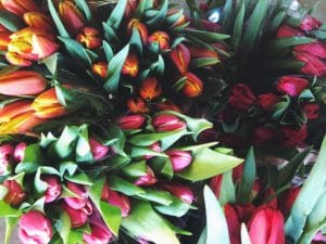 Tulips $12.95 per bunch