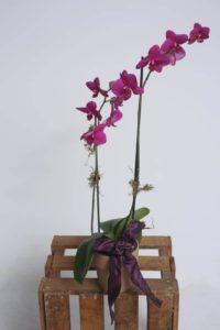 Orchids $25.95-$30