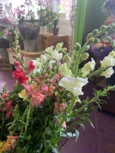 Local Snapdragons