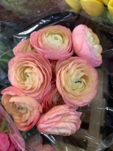 Ranunculus $2.50 per stem