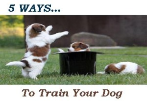 to train your dog