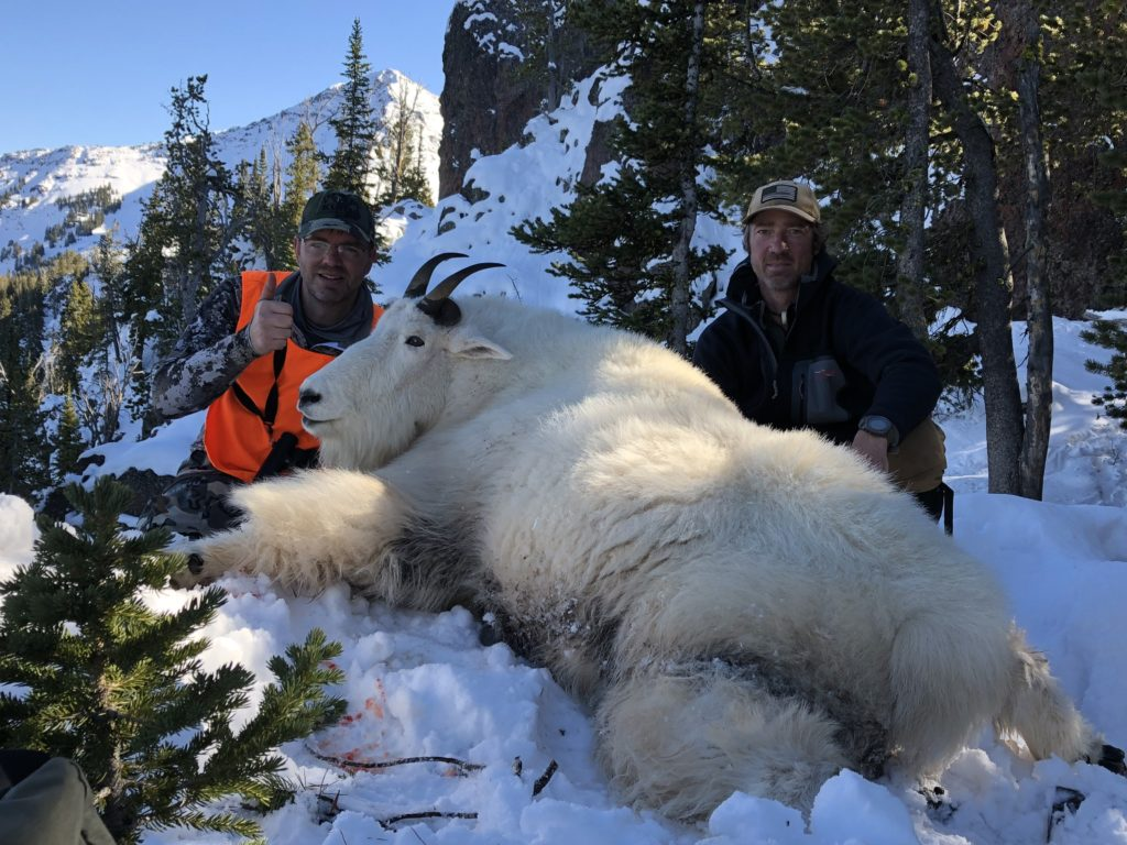 Mountain Goat hunting in Montana