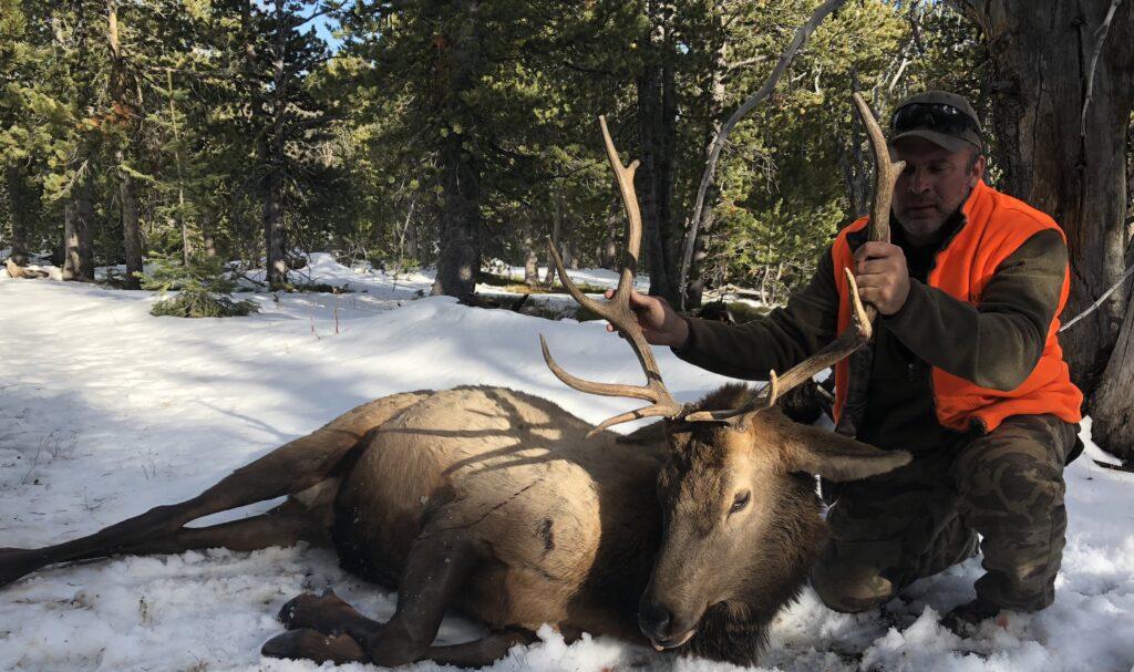 Montana guided elk hunts