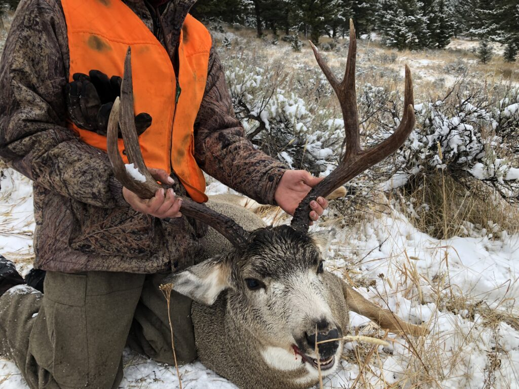 Montana guided deer hunt