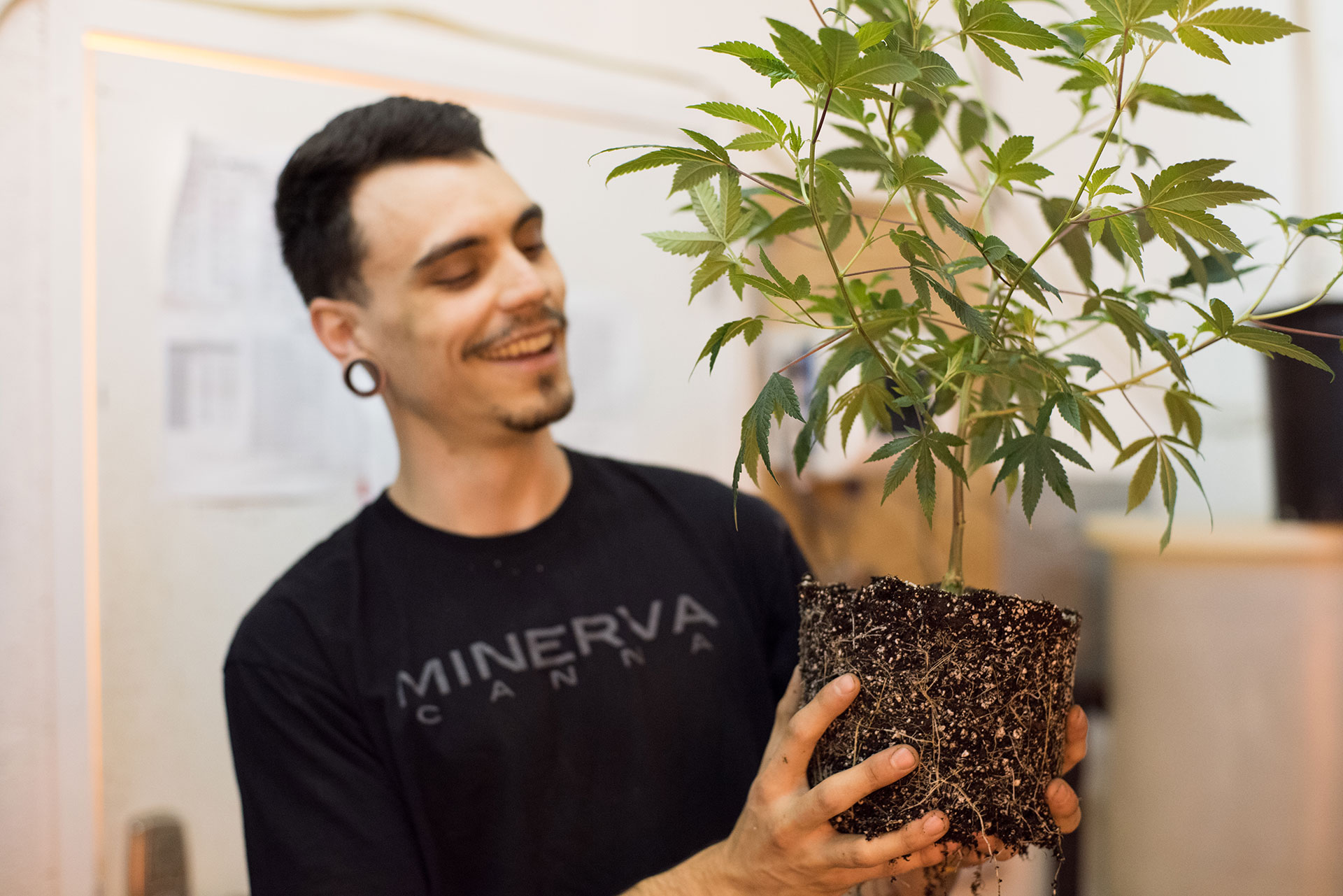 Minerva Canna Difference