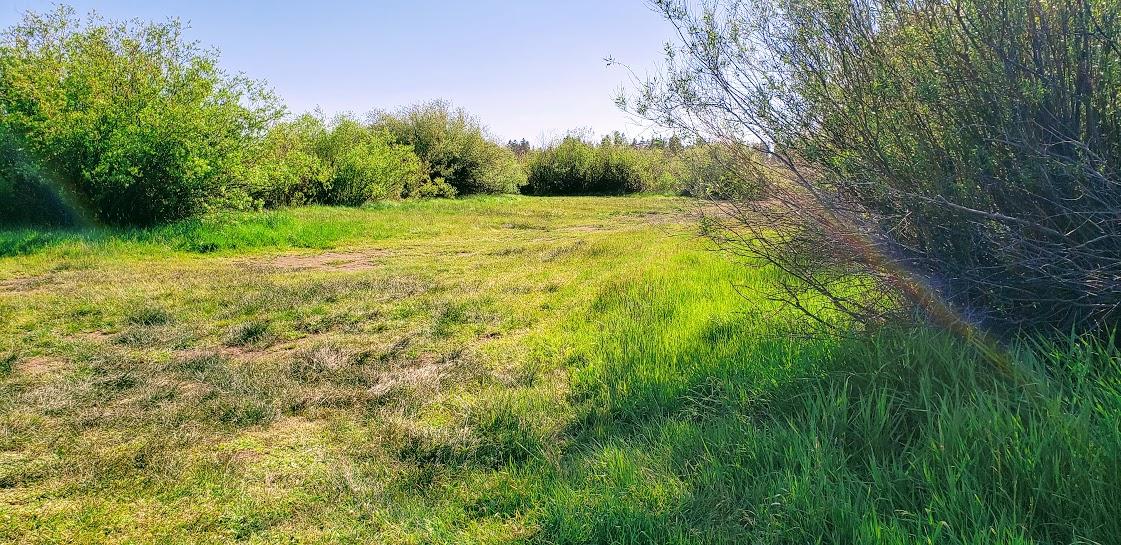 Bend Thousand Trails Dog area