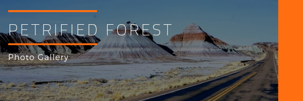 Petrified Forest National Park Photo Gallery