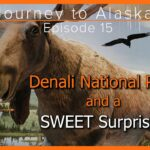 Journey to Alaska Episode 15 | Denali National Park | Sled Dogs