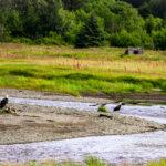 Campground Review   Deep Creek State Rec Area   Ninilchik Alaska