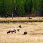 Ladies of Yellowstone