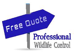 Free quote logo