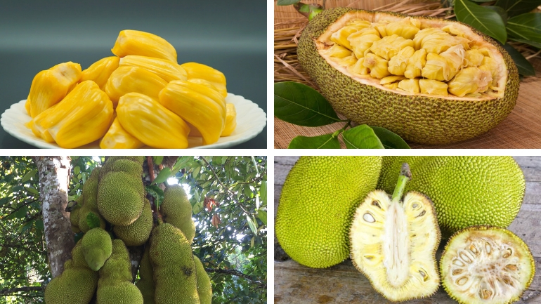 THEY SAID JACKFRUIT WAS GREAT FOR YOU, BUT THIS IS WHAT THEY DIDN'T TELL YOU