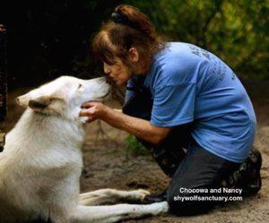 shy wolf sanctuary