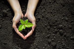 Grow into Root Function Wellness