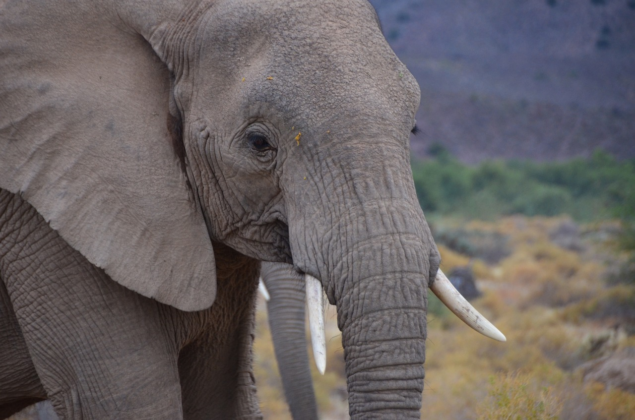 Kenya Launches Awareness Campaign to Stop Illegal Ivory