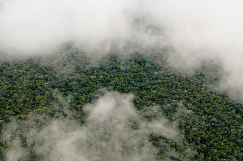 UK Government Launches New £150 Million Fund for Rainforest Protection