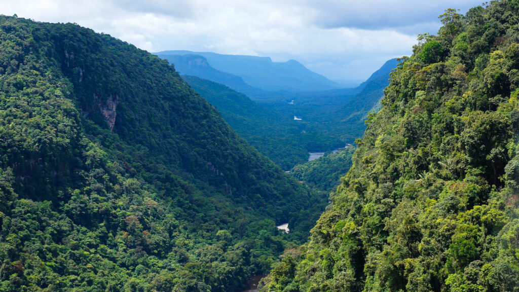 Lessons Learned From a Decade of REDD+ in Guyana