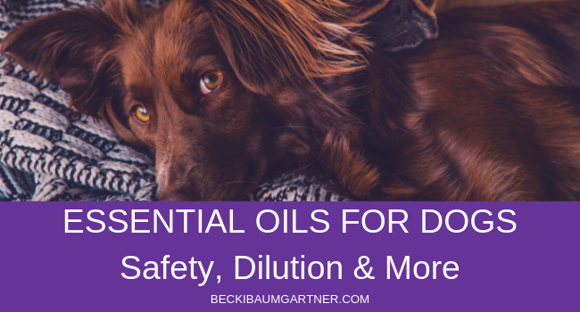 Image for Essential Oils Safety for Dogs Blog Post