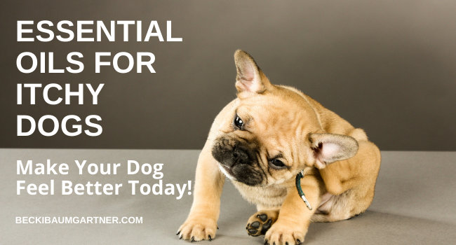 How to Soothe Dog Itching With Essential Oils