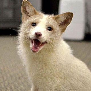 Fiona, Marble Fox