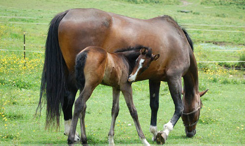 horse health insurance massachusetts