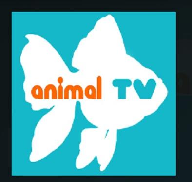 How to Install Animal TV Add-on Kodi 17.1 Krypton pic 1