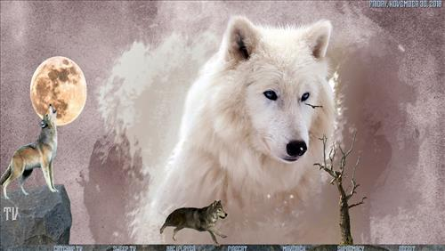 How to Install Wolf Kodi Build 18 Liea pic 1