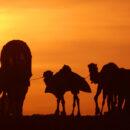 Vozes da estrada: de Ibn Battuta a Zé Cláudio – Fernando Dourado