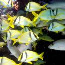 Amigos do Mar – Clemente Rosas
