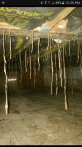 Termite Control in Newport Beach