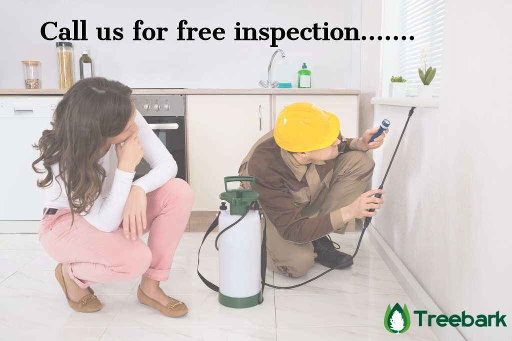woman-looking-at-worker-spraying-insecticide-under-windowsill-picture-id508454864