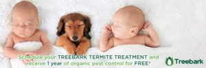Protect Everything You Love With Treebark Pest