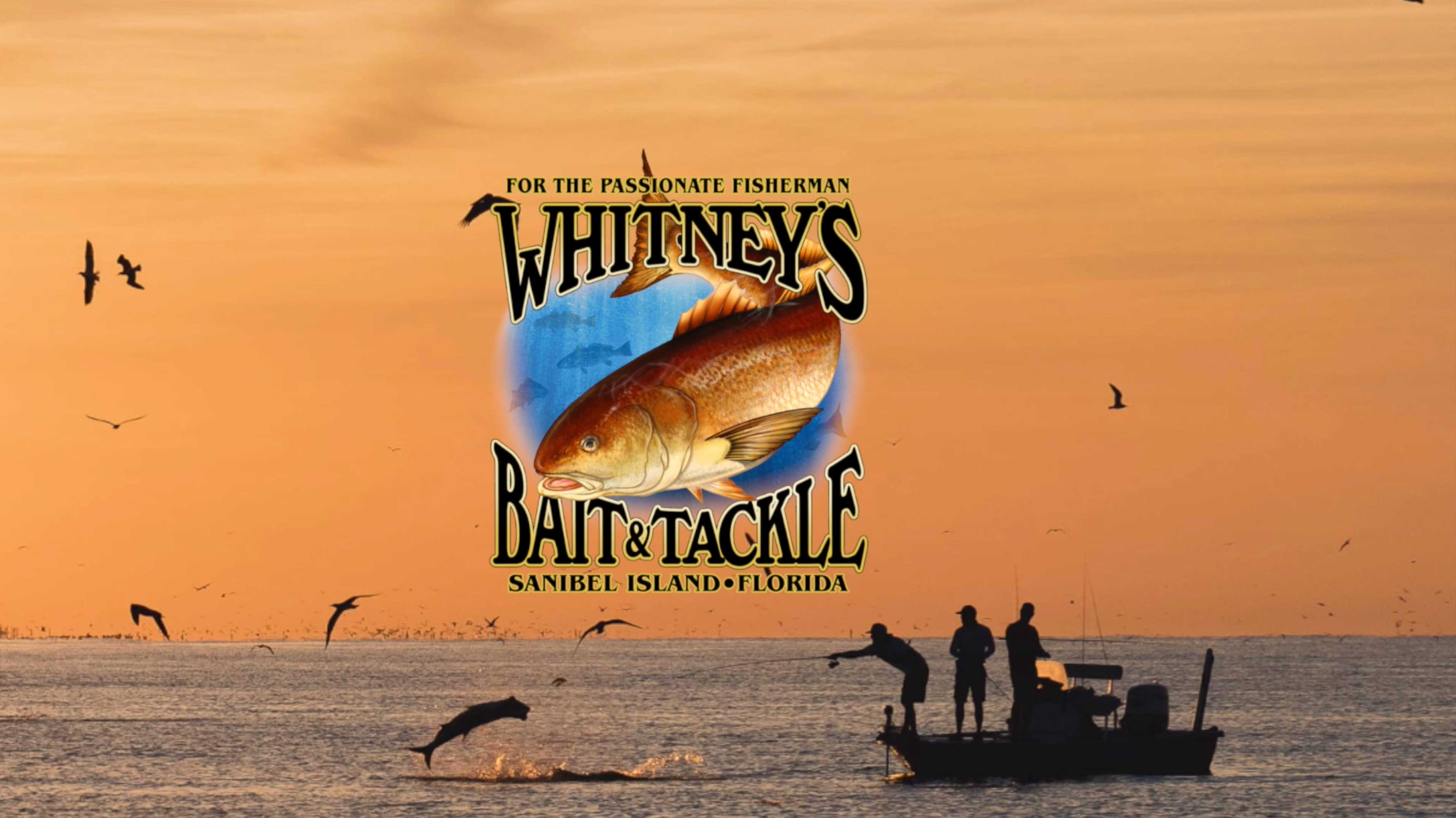 whitney's bait and tackle fishing charters