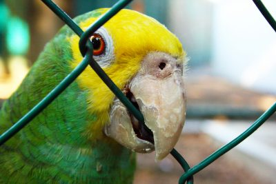 bird-in-a-cage