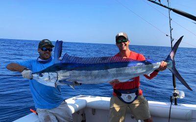 Tuna Daze White Marlin