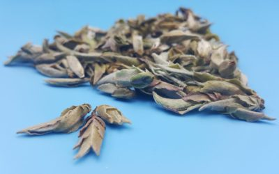 Nan Mei White Tea Review: Like Smoke Meets Brimstone