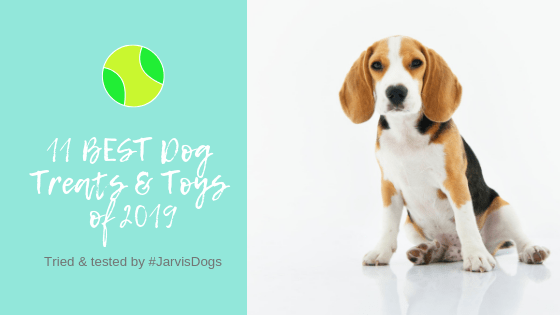 11 BEST Dog Toys on the Market in 2019