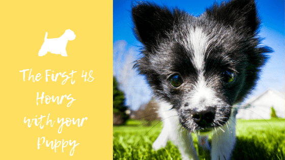 first 48 hours with your puppy