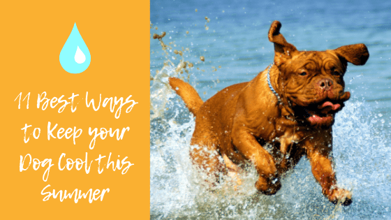 11 Best Ways to Keep your Dog Cool & Comfortable this Summer