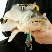 Where and How To Make the Most of First Ice Walleyes