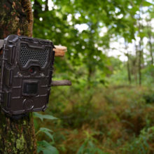 The 5 Best Trail Camera Strategies and Setups for Summer