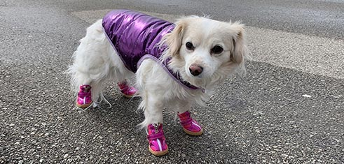 Small Dog Boots