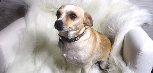 Glam Dog Collars