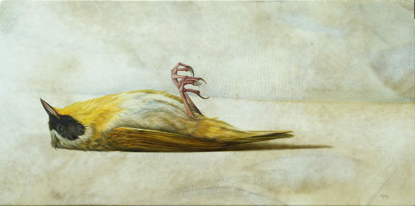 Flightless Warbler | oil on goatskin | 26x13
